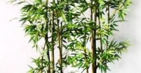 Tre xanh là loại cây đem đến sự tốt lành về sự nghiệp và may mắn tiền tài.