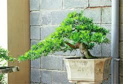 Trồng cây xanh để tránh mọi bệnh tật