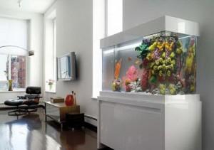 Đặt bể cá cảnh rước tài lộc vào nhà