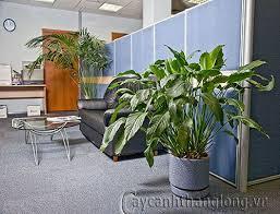 Đặt cây xanh cho phòng kế toán.